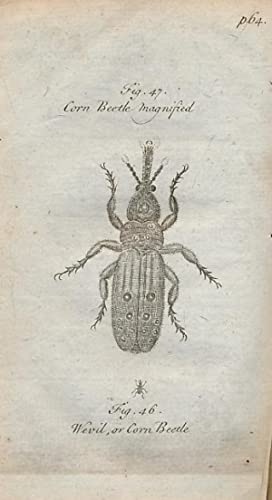 A Description of Three Hundred Animals] [Second Collection of Animals and Vegetables, with a ...
