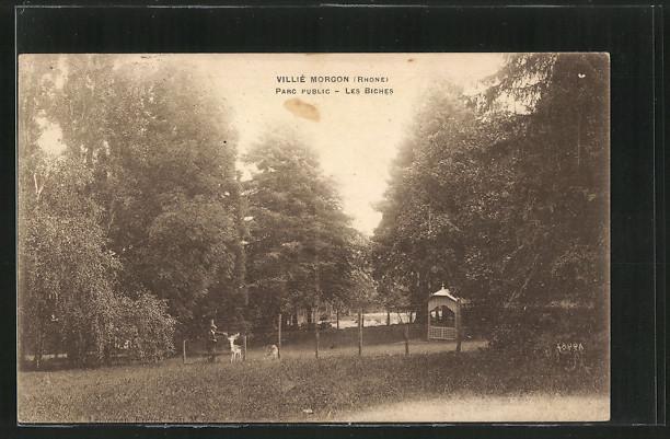 Carte postale Villié-Morgon, les biches dans le
