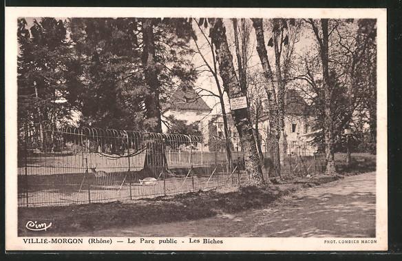 Carte postale Villié-Morgon, le parc public, les