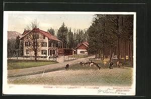 Ansichtskarte Langnau am Albis, Wildpark Langenberg, Restauration