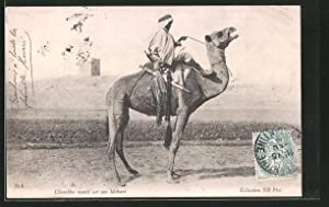 Ansichtskarte Chambba monté sur son Mehari, Araber