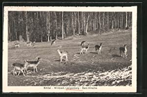 Ansichtskarte Langnau, Dam-Hirsche im Wildpark Langenberg