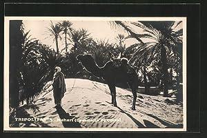Ansichtskarte Tripolitania, Mehari, Cammello a corsa, Araber