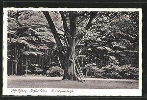 Ansichtskarte Dodau, Bräutigamseiche im Forsthof