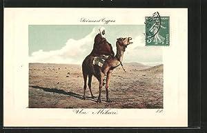 Ansichtskarte Méhari auf einem Kamel