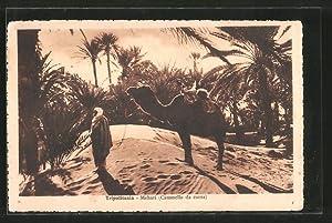 Ansichtskarte Tripolitania, Mehari, Kamel und Führer