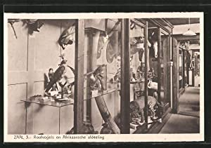Ansichtskarte Denekamp, Museum Zaal 3 Roofvogels en
