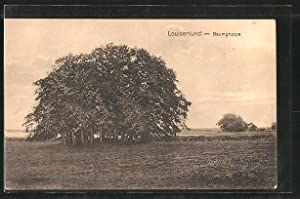 Ansichtskarte Güby, Baumgruppe bei Louisenlund