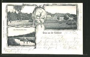 Ansichtskarte Neustrelitz, Forsthaus Kalkhorst, Rothtannen, Am Trebbower