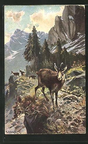 Künstler-Ansichtskarte Gamswild im Gebirge