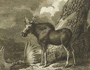 Arctic Zoology: PENNANT Thomas