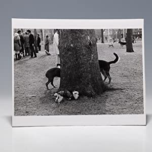 Photographic print of dogs surrounding tree: KERTESZ Andre