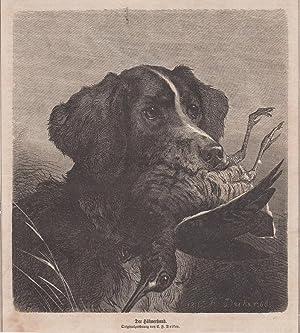 Orig. Holzstich: Der Hühnerhund. Originalzeichnung von C. F. Deiker,