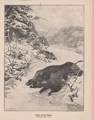 Orig. Holzstich: Keiler auf der Flucht. Gemälde von Otto v. Ernst.
