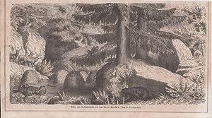 Orig. Holzstich: Thier- und Landschaftsbild aus dem Norden Amerika's. Von H. Leutemann.