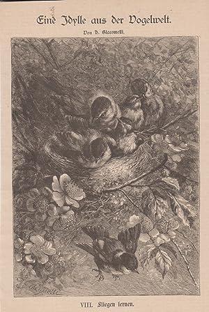Orig. Holzstich: Eine Idylle aus der Vogelwelt. Nummer VIII. Fliegen lernen. Von H. Giacomelli. Mit...