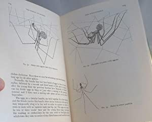 The World of Spiders: W S Bristowe