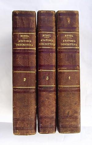 Corso di anatomia descrittiva: RUDEL FORTUNATO.