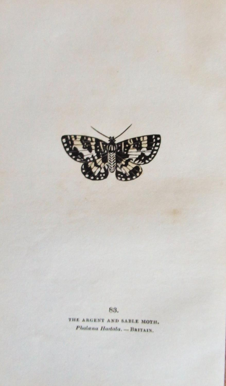THE_ARGENT_AND_SABLE_MOTH__COPPER_PLATE_ENGRAVING_CAPTAIN_THOMAS_BROWN_Very_Good