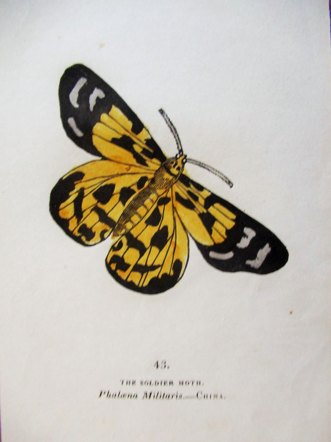 THE_SOLDIER_MOTH_-_COPPER_PLATE_ENGRAVING_1844_CAPTAIN_THOMAS_BROWN_[Very_Good]