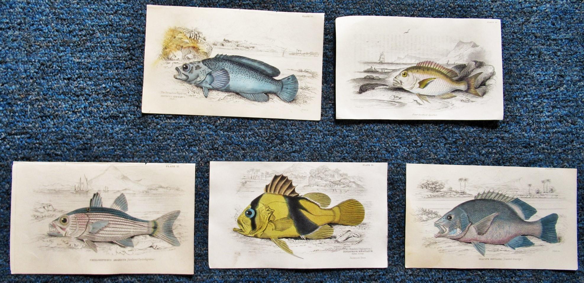 FIVE_5_ORIGINAL_COPPER_PLATE_ENGRAVINGS_OF_FISH__2_JARDINE__LIZARS_Very_Good