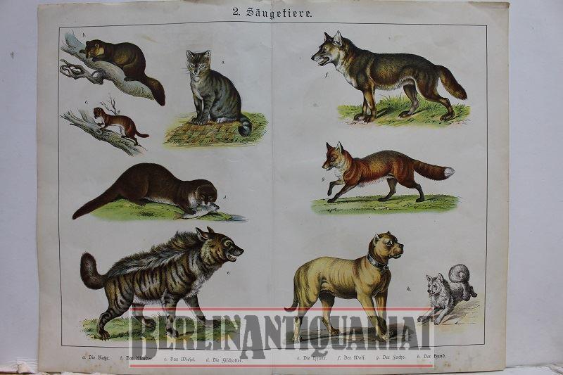 2.Säugetiere. [Kolorierte Lithographien wohl aus einem Buch.]: Hunde und :