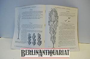 Der praktische Zeichner. Abt. 1. Wie lernt man Bäume zeichnen ? Heft 1. Zwei junge Pappeln als...