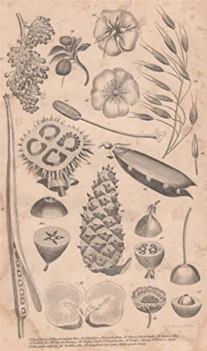 An Original 1821 Botanical Engraving of Various Plants from the British Encyclopedia : or Diction...
