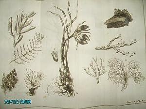LES PLANTES MARINES,2 PLANCHES: LE BAS J.-P.(Gravure)