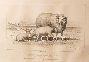 Considérations sur les bêtes à laine au: Malingié-Nouel, Edouard (Rosa