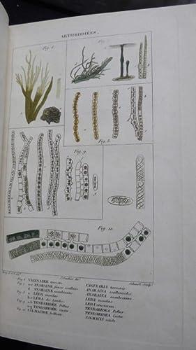 Arthrodiées. Extrait du 1er volume du Dictionnaire classique d'histoire naturelle: Bory...
