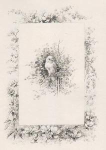 Histoire d'un merle blanc. Compositions de Hector: Musset, Alfred de