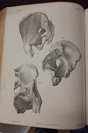 A Series of Anatomical Plates; with References and Physiological Comments, illustrating the Struc...