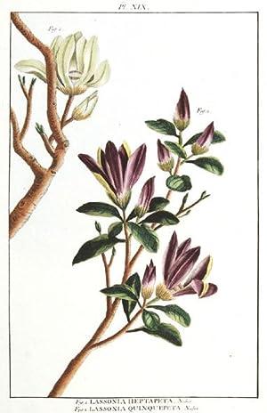 Fig. 1, Lassonia Heptapeta.Nobis. Fig.2, Lassonia Quinquepta.: BUCHOZ, Pierre Joseph.