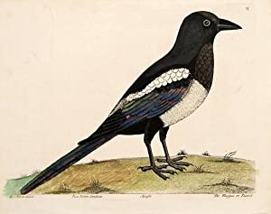 The Magpie or Pianet. Plate 15.: ALBIN, Eleazar.