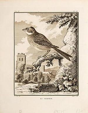Le Verdier. Pl. IX.: BUFFON, Georges Louis Leclerc, comte de.