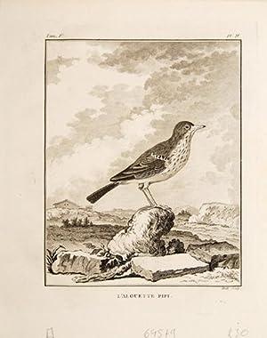 1. Le Figuer. 2. Le Pitpit. Pl. XV.: BUFFON, Georges Louis Leclerc, comte de.