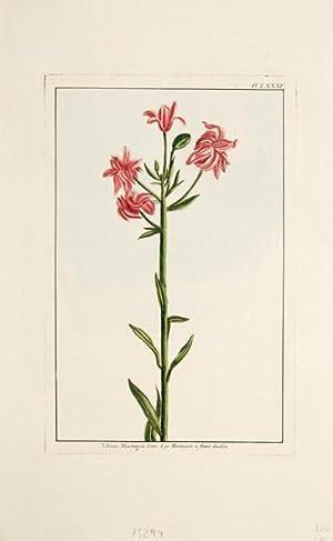 Lilium Martagon. Linn. Lys Martagon à fleurs doubles. Pl. LXXXV.: BUCHOZ, Pierre Joseph.