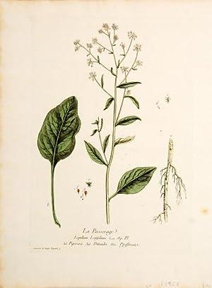 La Passerage. (Dittander): REGNAULT, Nicolas François & Genevieve.