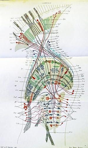 """Contribucion al conocimiento de los centros nerviosos de los insectos."""" Offprint from Trabajos..."""