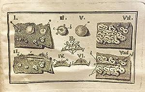 De sedibus variolarum (smallpox): COTUNNI (COTUGNO), Dominic