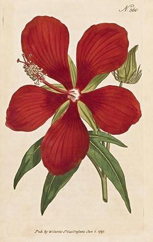 The Botanical Magazine; or, Flower-Garden Displayed in: CURTIS, William