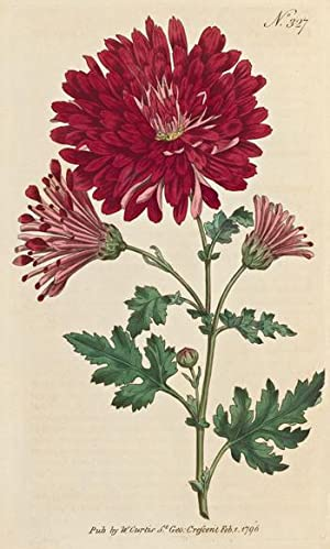 The Botanical Magazine; or, Flower-Garden Displayed in which the most ornamental foreign plants, ...