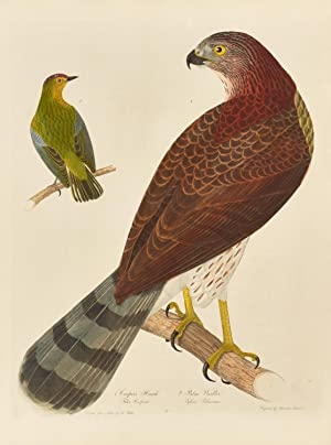 American ornithology; or, the natural history of birds inhabiting the United States, not given by ...