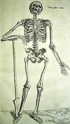 Librorum Andreae Vesalii Bruxellensis De humani corporis: VESALIUS (Andreas);