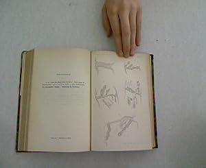 Ein Lichtreflex der Retina, in: Archiv für Ophthalmologie. Dreissigster Band. Abtheilung I + ...