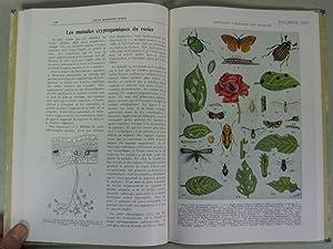 REVUE HORTICOLE SUISSE. Publication Mensuelle, Scientifique et Pratique D'Horticulture, Annee ...