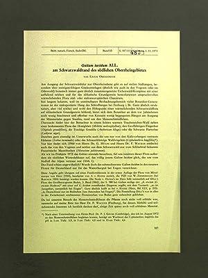 Galium lucidum All. am Schwarzwaldrand des südlichen: Oberdorfer, E.: