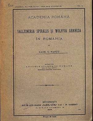 VALLISNERIA SPIRALIS SI WOLFFIA ARRHIZA ÎN ROMANIA.: Pantu, Zach. C.: