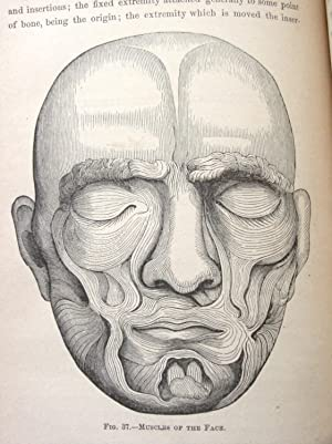 Expression: Its Anatomy And Philosophy, With Original Notes And Illustrations Designed By The ...